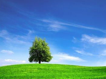 Разработка документации экологической безопасности
